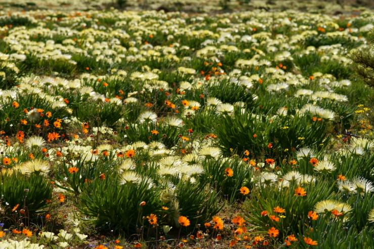 Namaqualand, Namibia and South Africa
