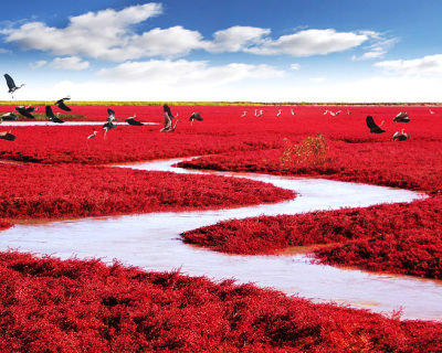 Incredible Red Seabeach in China