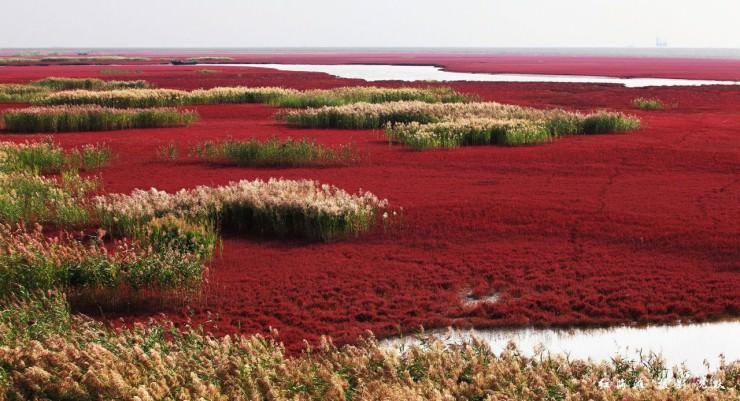 Red Seabeach, Panjin, China