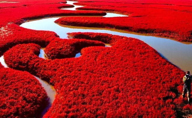 Incredible Red Seabeach in China | Places To See In Your ...