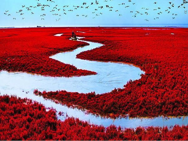 Image result for Red Beach, Tianjin, China