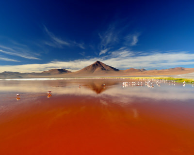 Bloody Red Laguna Colorada in Bolivia