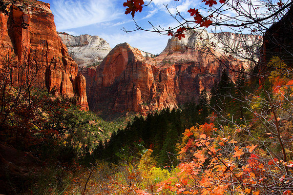 Colorful Foliage in Zion Canyon in Utah, USA