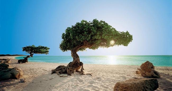 Dutch Holiday Paradise in the Caribbean – Wonderful Aruba
