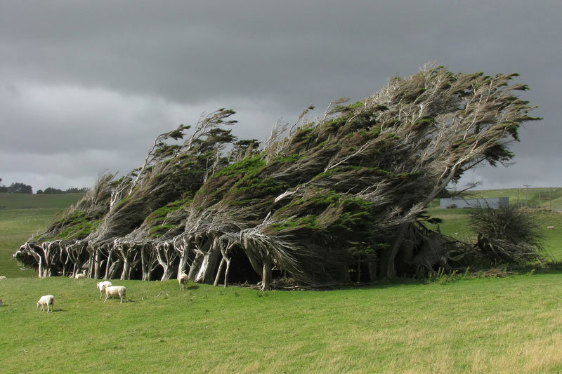 Windswept Trees in the Brute Slope Point, New Zealand | Places To See In Your Lifetime
