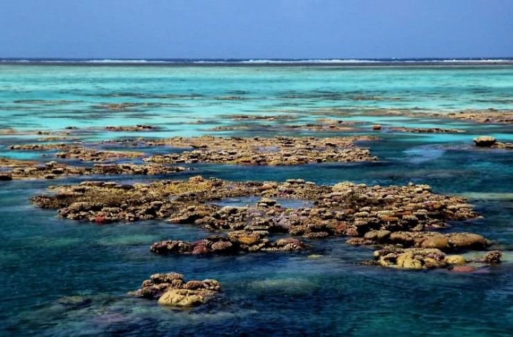 The Great Barrier Reef's Gardens at Low Tide in Australia