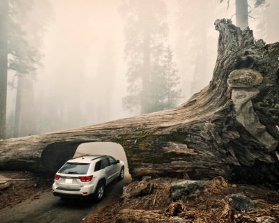 The World's Largest Trees in the Sequoia National Park, USA