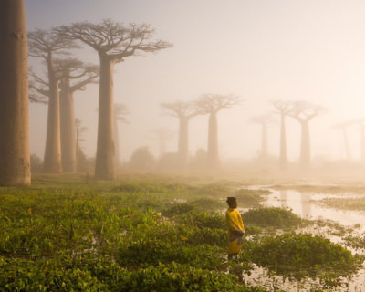 Avenue of the Baobabs – the Most Beautiful Road in Madagascar
