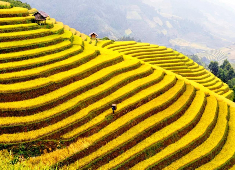 Impressive Terraced Rice Fields in Sa Pa, Vietnam