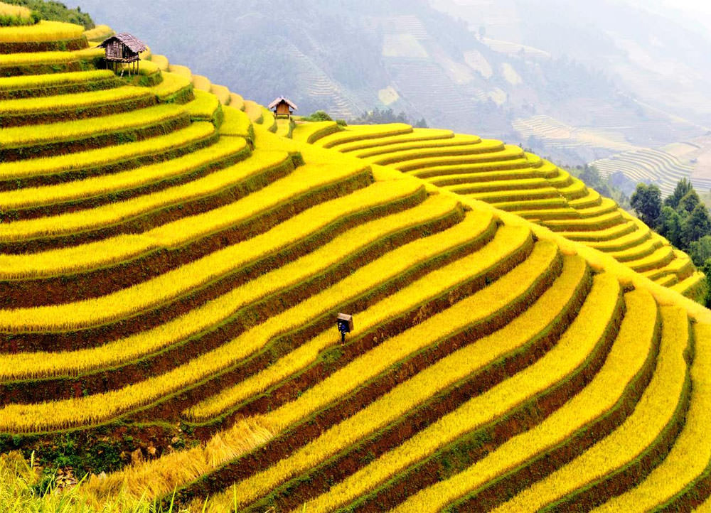 Impressive Terraced Rice Fields in Sa Pa, Vietnam | Places To See In Your Lifetime