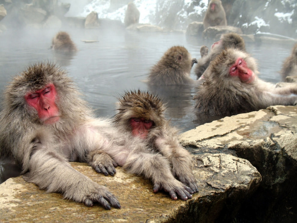 Hot Springs in Nagano – the Favorite Winter Spot for Macaques, Japan