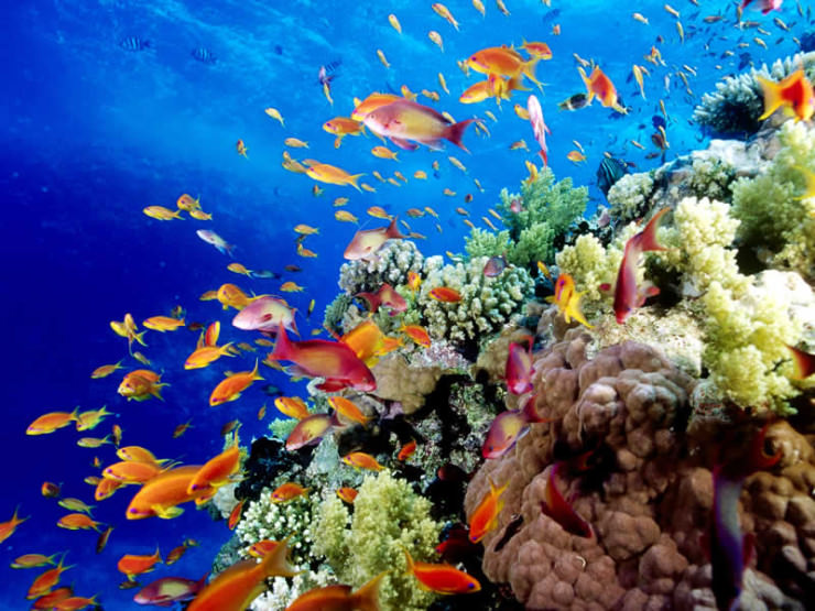 Top 10 Diving Sites-Australia2