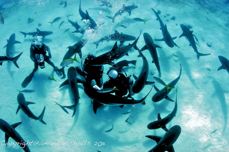 Top 10 Diving Sites-Bahamas- Photo by Amanda Nicholls