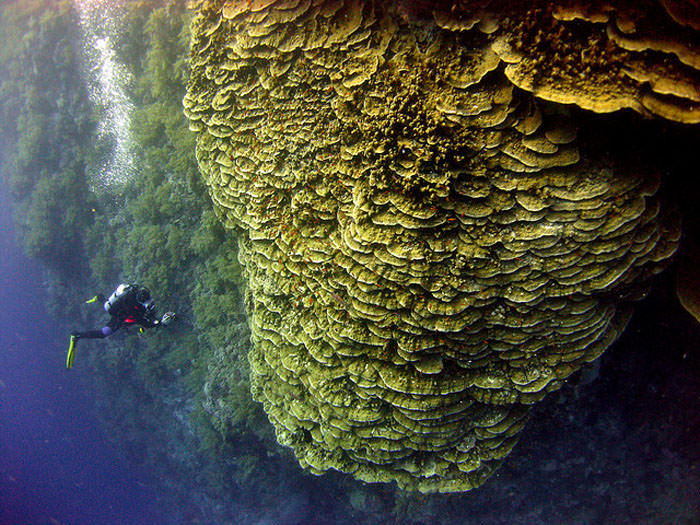 Top 10 Diving Sites-Red Sea-Photo by Catherine Marshall
