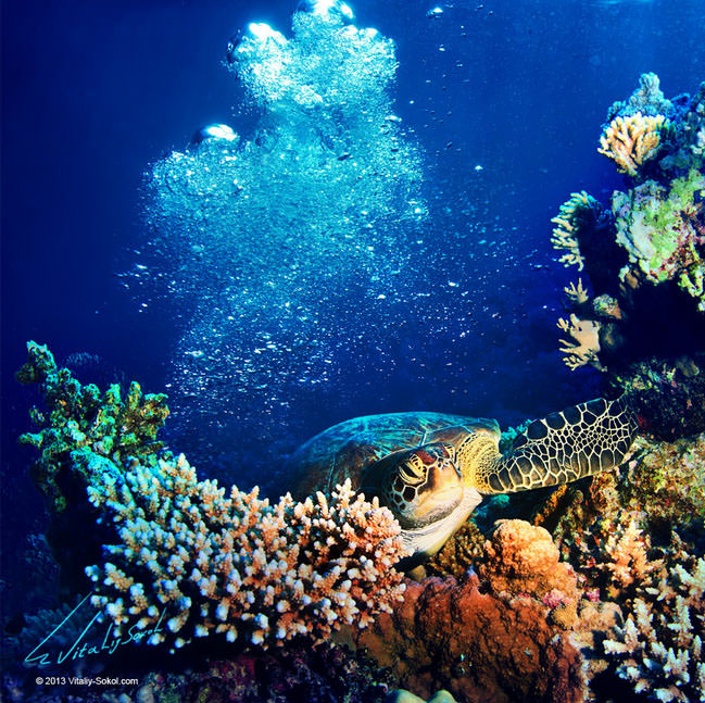 Top 10 Diving Sites-Red Sea-Photo by Vitaliy Sokol2