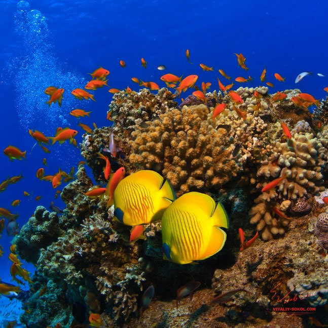 Top 10 Diving Sites-Red Sea-Photo by Vitaliy Sokol5