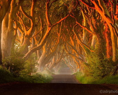 The Dark Hedges – a Spooky Avenue in Northern Ireland