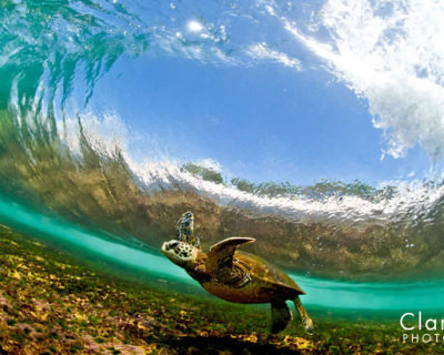 Top Things to Do and See in Hawaii