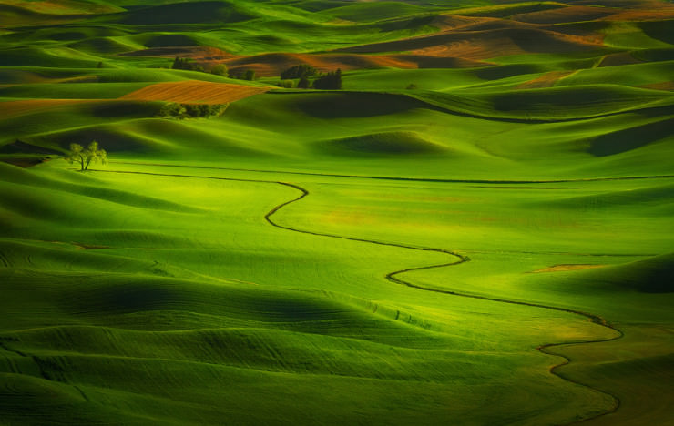 Palouse-Photo by Miles Morgan