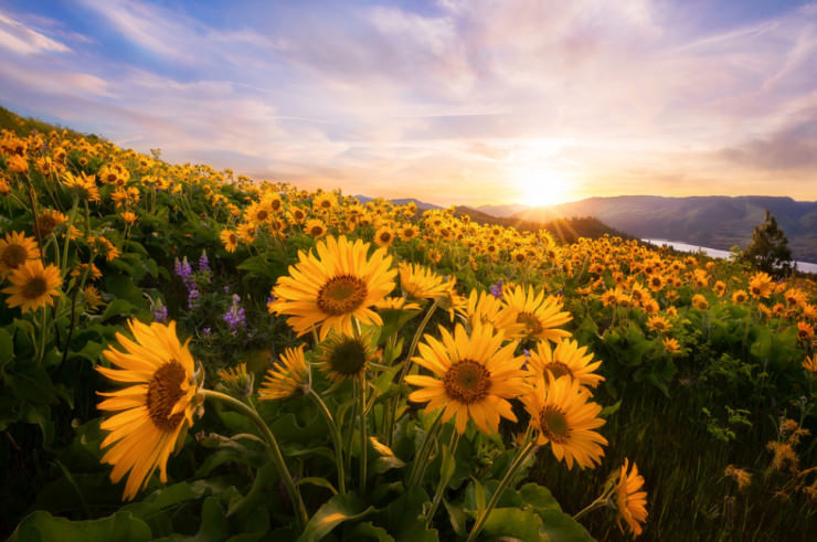 Top 10 Spring Destinations-Columbia-Photo by Michael Bollino