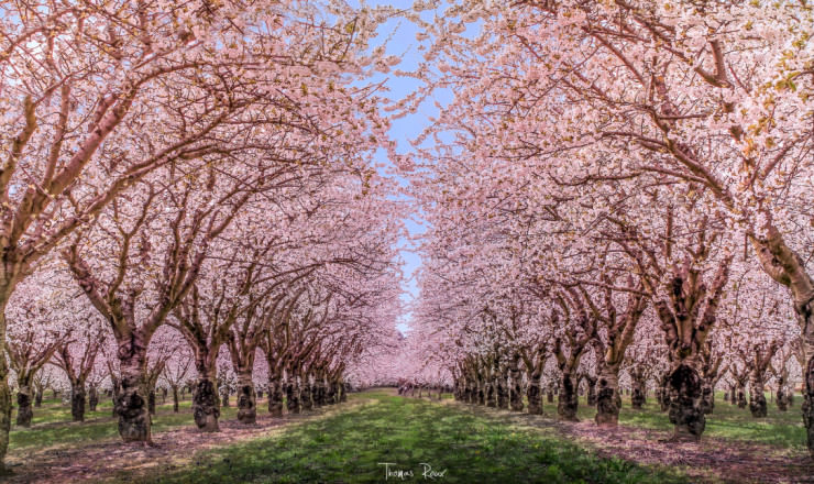 Top 10 Spring Destinations-France-Photo by Thomas Roux