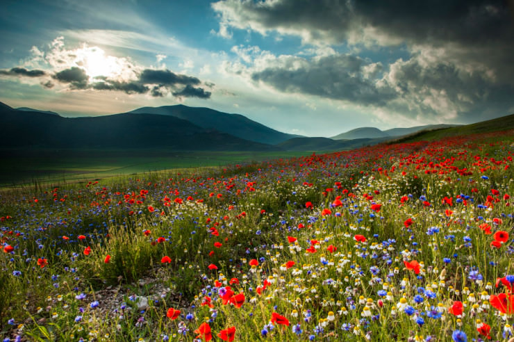 Top 10 Spring Destinations-Italy-Photo by Massimo Tommi