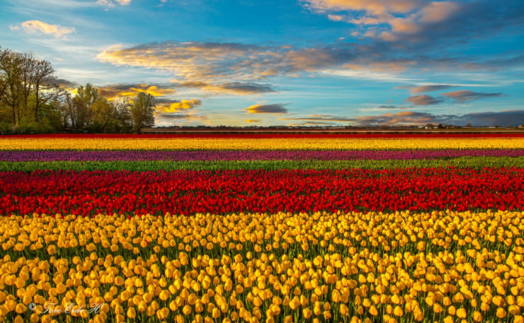 Top 10 Spring Destinations-Netherlands-Photo byTore H