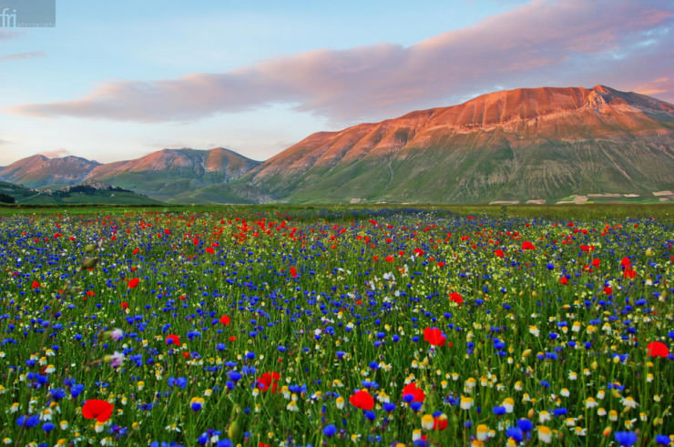 Top 10 Paragliding Sites-Castelluccio-Photo by Francesco Riccardo Iacomino