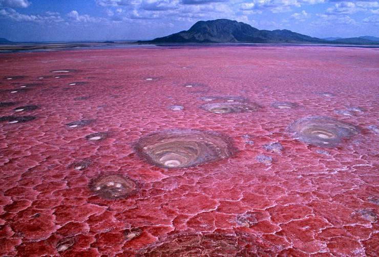 دریاچه صورتی تانزانیا