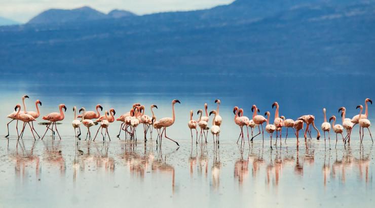 دریاچه قرمز تانزانیا