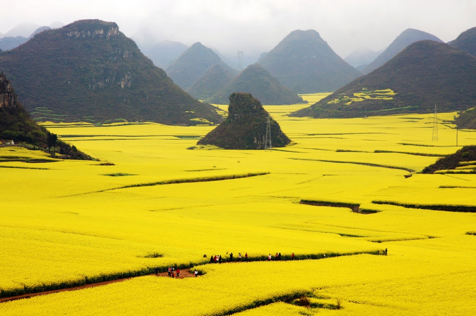 golden canola fields in luoping china places to see in your lifetime