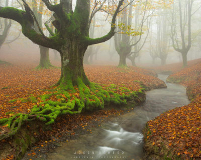 Enigmatic Forests in Gorbea Natural Park, The Basque Country