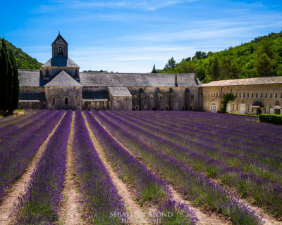 Provence Nature Bursts with Color and Fragrance, France