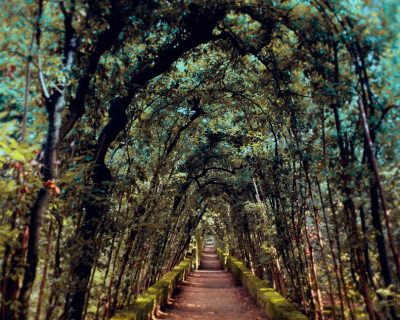 Lush Boboli Gardens in the Heart of Florence, Italy