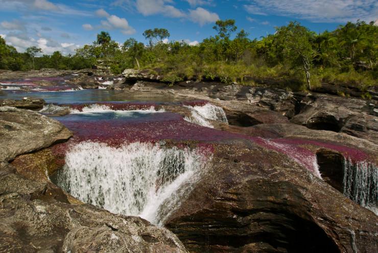 Caño Cristales رودخانه پنج رنگ در کلمبیا
