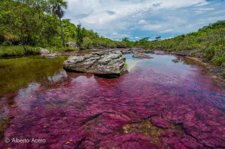 Caño Cristales-Photo by Alberto Acero2