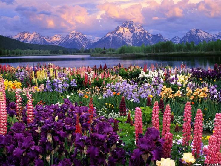 Top 10 Flowery Fields-Grand Teton