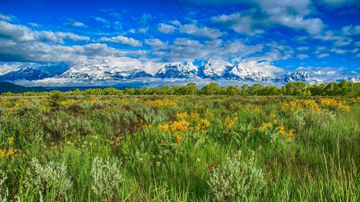 Top 10 Flowery Fields-Grand Teton-Photo by The Bitter Buffalo