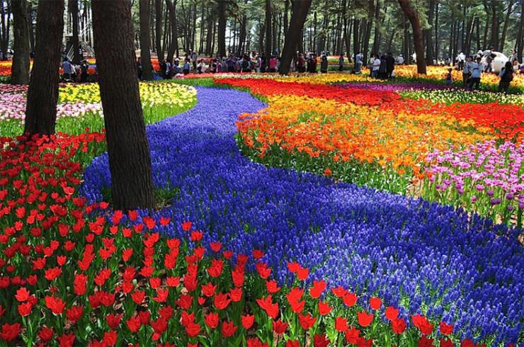 Top 10 Flowery Fields-Hitachi