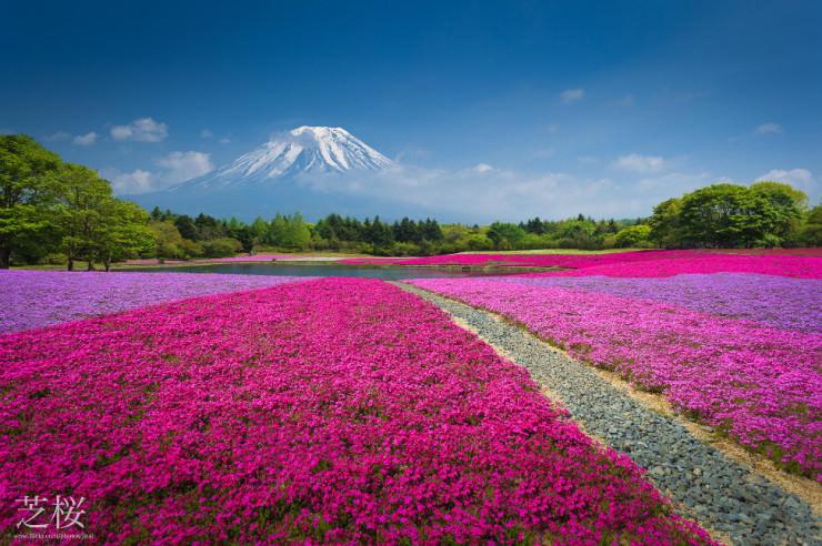 Top 10 Flowery Fields-Japan-Photo by Jirat Srisabye
