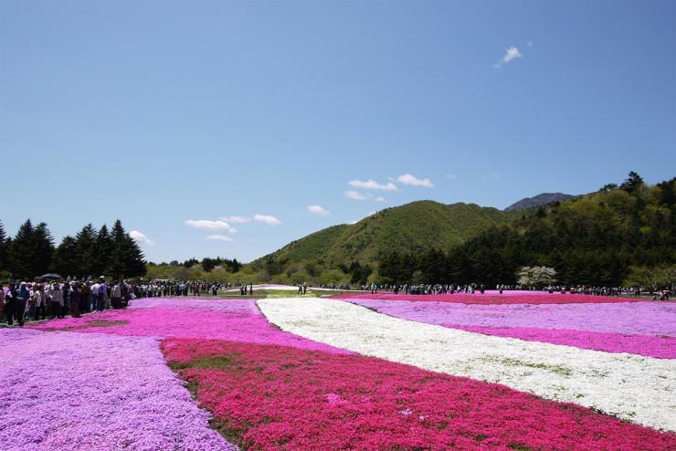 Top 10 Flowery Fields-Japan-Photo by sonotoki