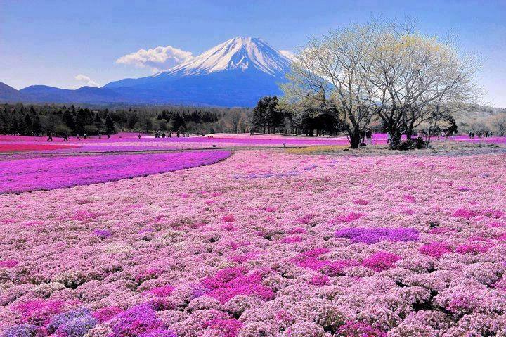 Top 10 Flowery Fields-Japan
