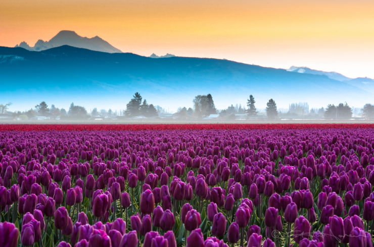 Top 10 Spring Destinations-Mt Baker-Photo by Kevin Hartman