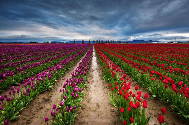 Top 10 Spring Destinations-Mt Baker-Photo by Nae Chantaravisoot