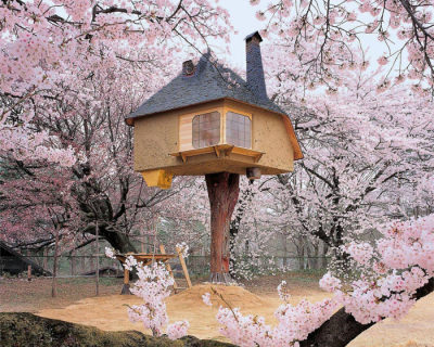 29 Tree Houses You Would Love to Live In