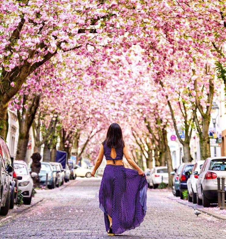 Cherry Blossom Avenue, Bonn