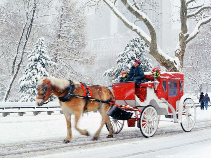 Top 10 Central Park-Carriage