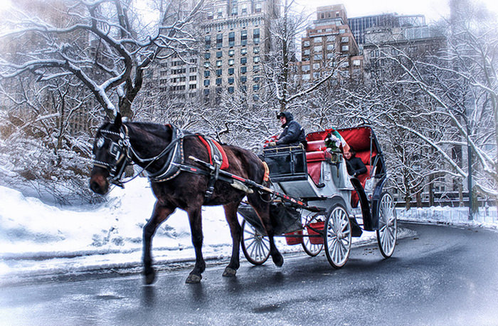 Top 10 Central Park-Carriage-Photo by David Stevens