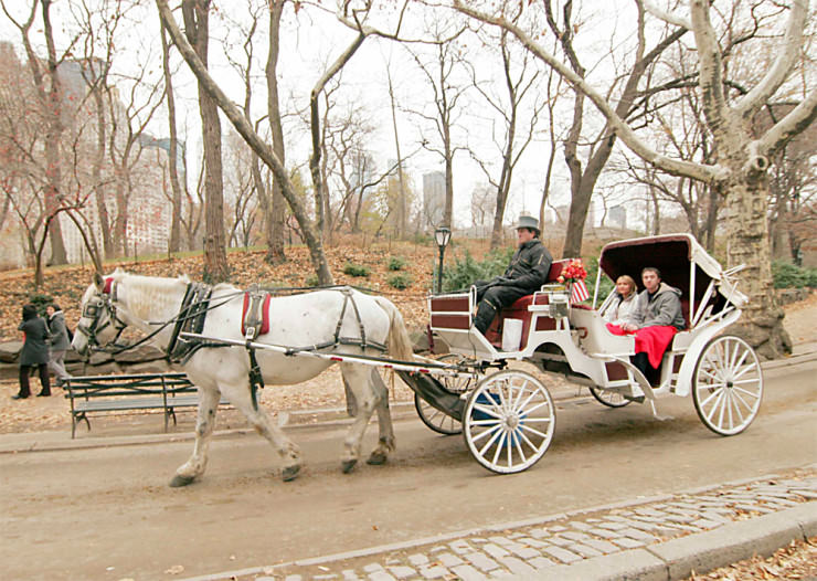 Top 10 Central Park-Carriage2