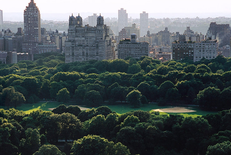 Top 10 Central Park-Great Lawn